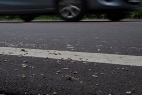 The train millipedes killed on a road.
