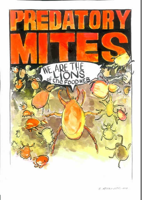 Predatory mites are a critical part of the soil food web. Original artwork by Ed Reynolds