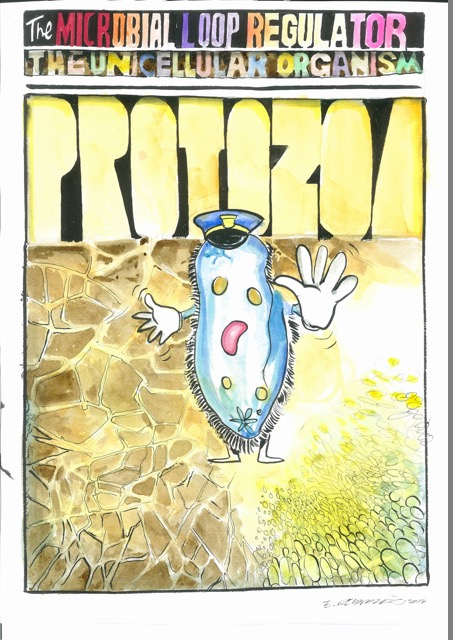 Protozoa play important roles transferring energy and nutrients in soil.  Original artwork by Ed Reynolds