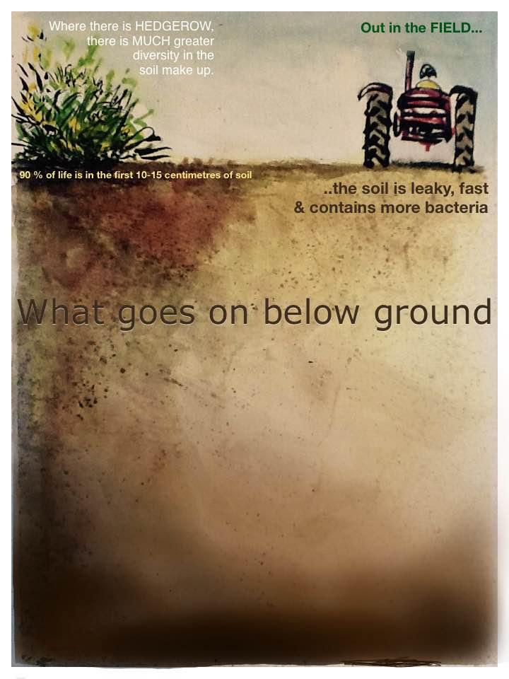 Art communicates the importance of soil life. Original artwork by Ed Reynolds