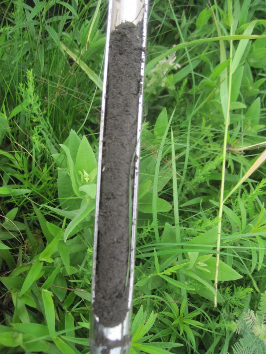 Soil from a high plant diversity restoration. Photo credit: Elizabeth Bach