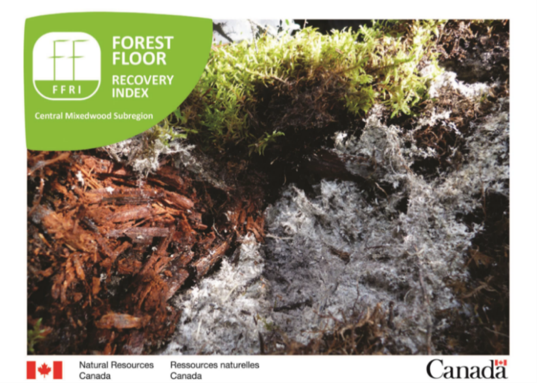 The Forest Floor Recovery Index                                             Image by D.Hoffman