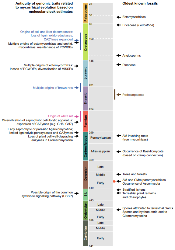 Figure 1 of Strullu-Derrien et al. (2018) showing the appearance of genomic traits related to mycorrhizal evolution (left)and the oldest known fossils (right). The asterisk represents the Rhynie chert. AM, arbuscular mycorrhizas; CAZymes, Carbohydrate-Active enZYmes; CMm, coil-forming mycorrhizas in Mucoromycotina; MiSSPs, mycorrhizainduced small secreted proteins; PCWDEs, plant cell wall-degrading enzymes. Figure reproduced with permission of the authors and New Phytologist.