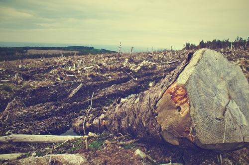 deforestation-405749_640.jpg