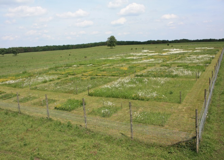 Field experiment showing in front a row of 2x2 m plots used in the experiment.