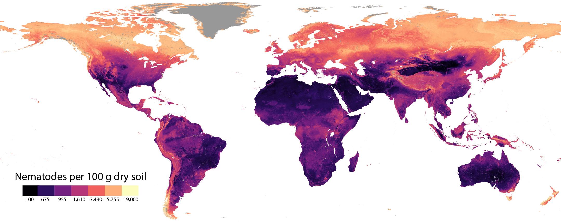 Global soil nematode abundance, in individuals per 100 gram dry soil