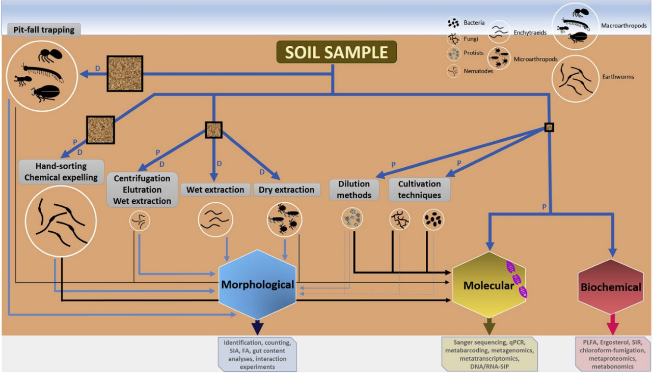A framework for studying soil biodiversity (originally published in a  paper  in Soil Biology and Biochemistry).