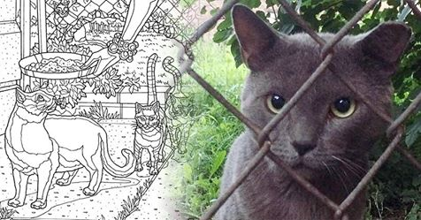 illustration from smokey from the block cat coloring book on amazon, written by pet celebrant laura king and illustrated by thomas draplin, plus a photo of smokey