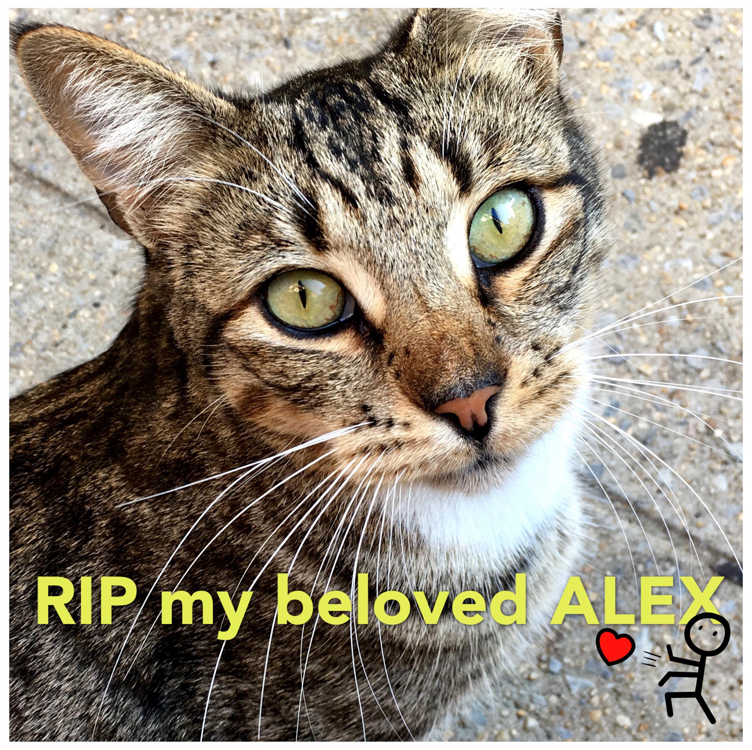 RIP-Alex-Tabby.JPG