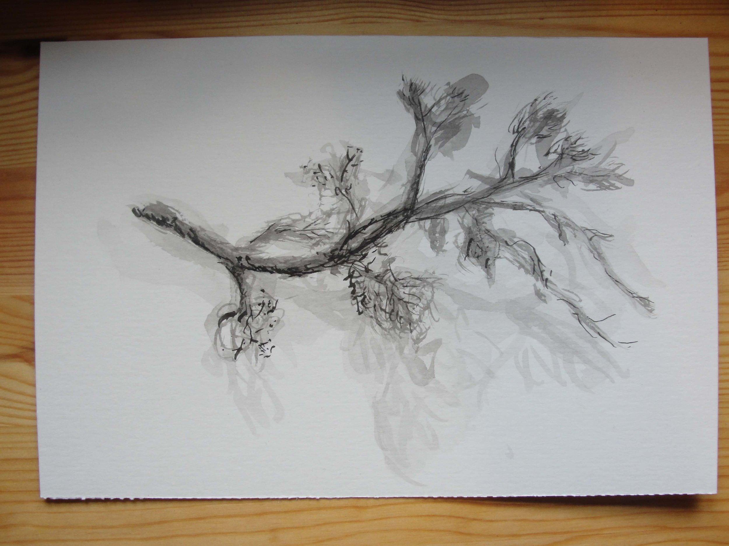 5 dias de desenho na natureza6.jpg