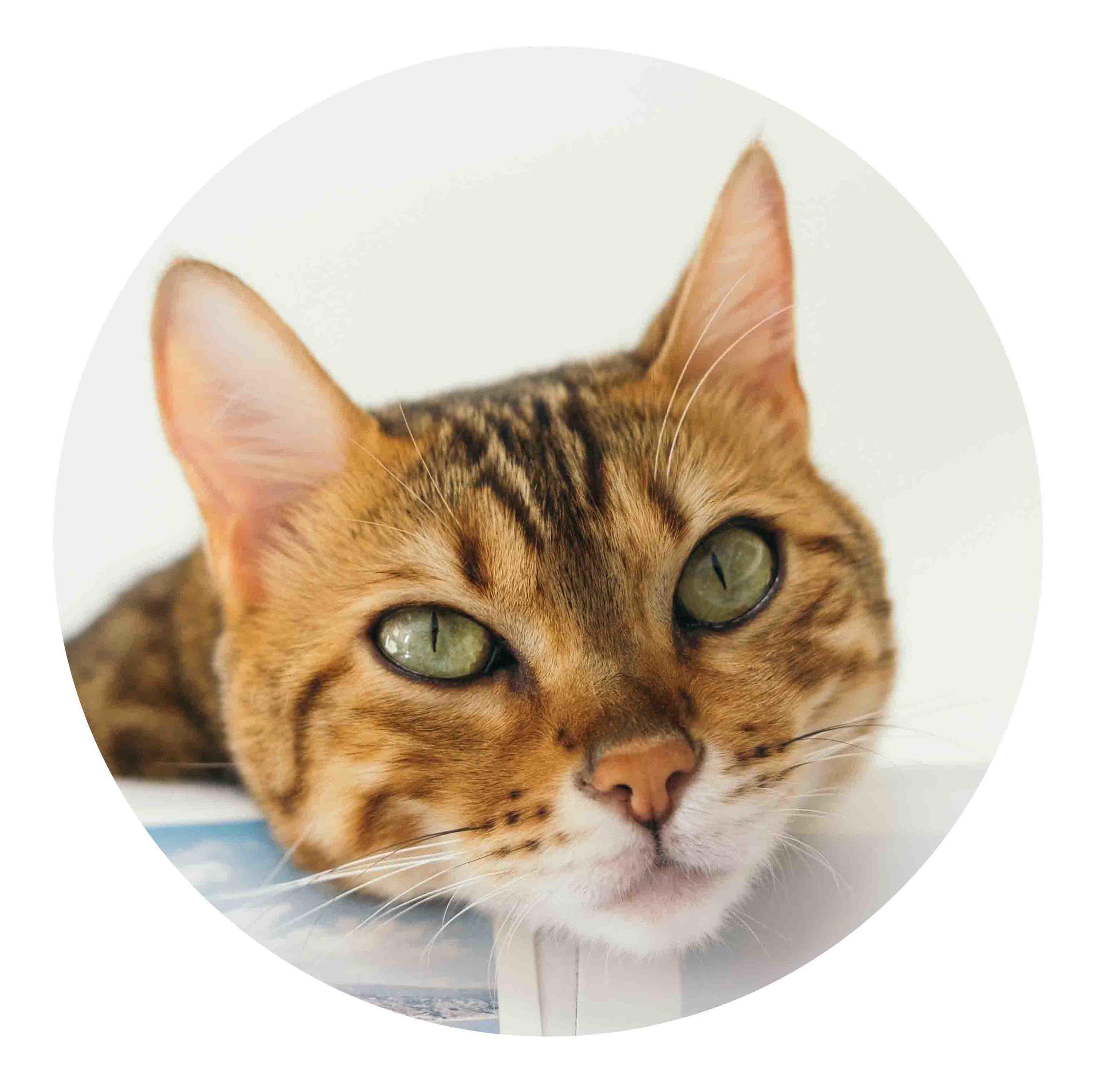 circlecat.jpg