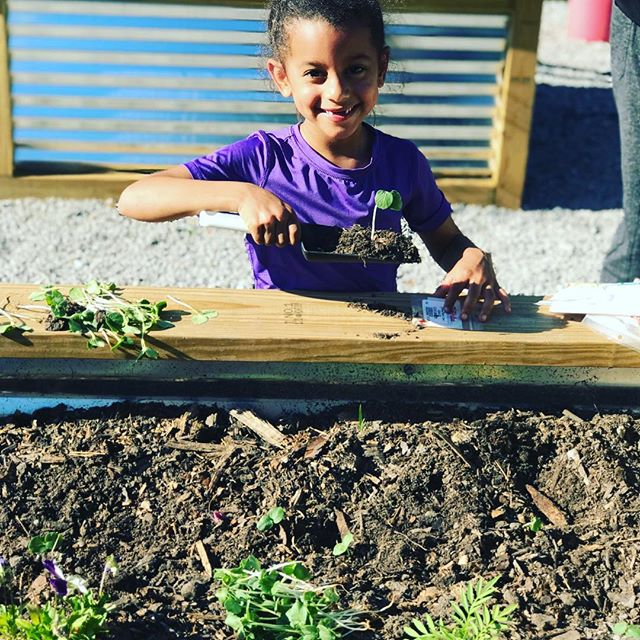 💚I met this cutie at the #communitygarden this week. Ella brightened my day with all of her enthusiasm!!😆 It was contagious. She dug right in. No gloves 🧤 no shovel, just her little bare hands!! . 🌱 How much do your little ones know about where their food comes from? 🌱Do they know what Brussels sprouts, greens, okra, tomato, onions and fresh green beans look like straight out of the garden and not just on their dinner plates? 🌱Let me introduce them to Ella 👩🏻‍🌾 . @batonroots #geauxgethealthy @preprealmeals 🍆 🥒 🍈 🍅 🥬 @growbatonrouge