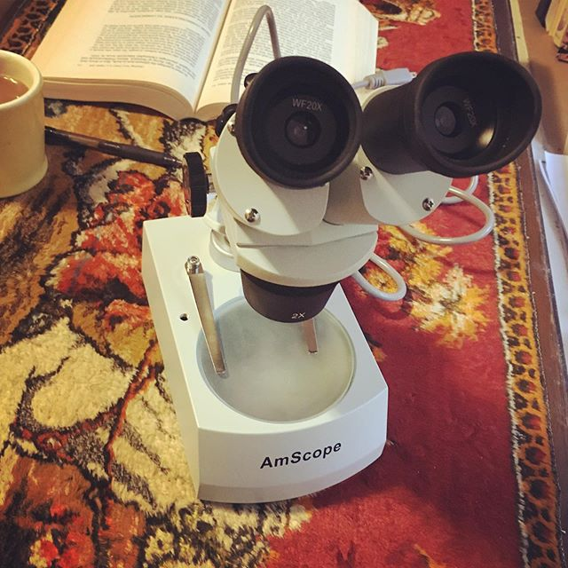 Who needs Virtual Reality when you can have a microscope? When you look closely at the natural world, it gets more detailed - and no pixels! #highlowtech