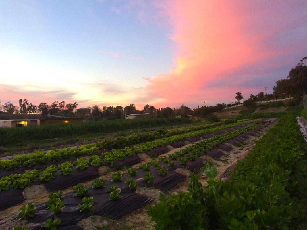 EUSD-Blog-Post-10.19.2017-field-shot-sunset.jpg