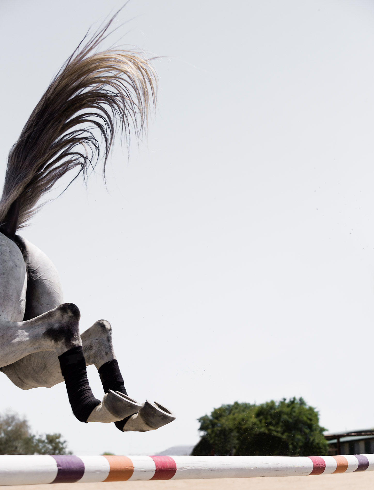 Phoenix Equine Photographers