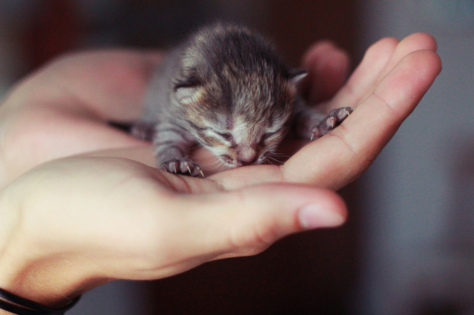 WHY A KITTEN NURSERY? - These tiny lives are literally in our hands and it's up to us to save them. Learn more about the Little Paws Project!