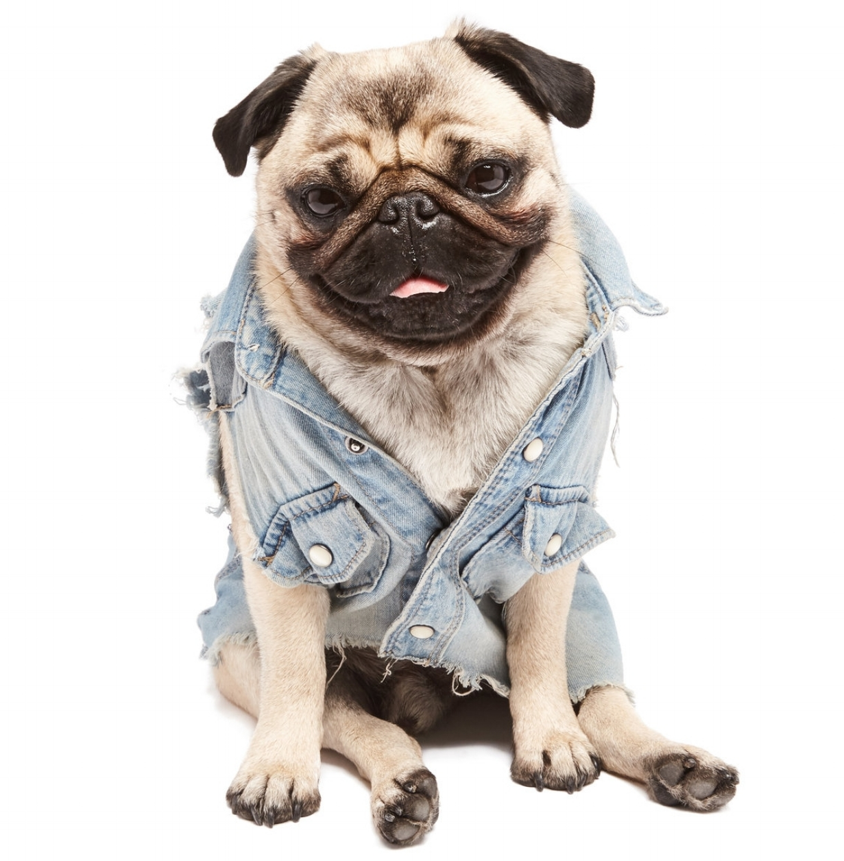 Helmut the Pug - About.jpg