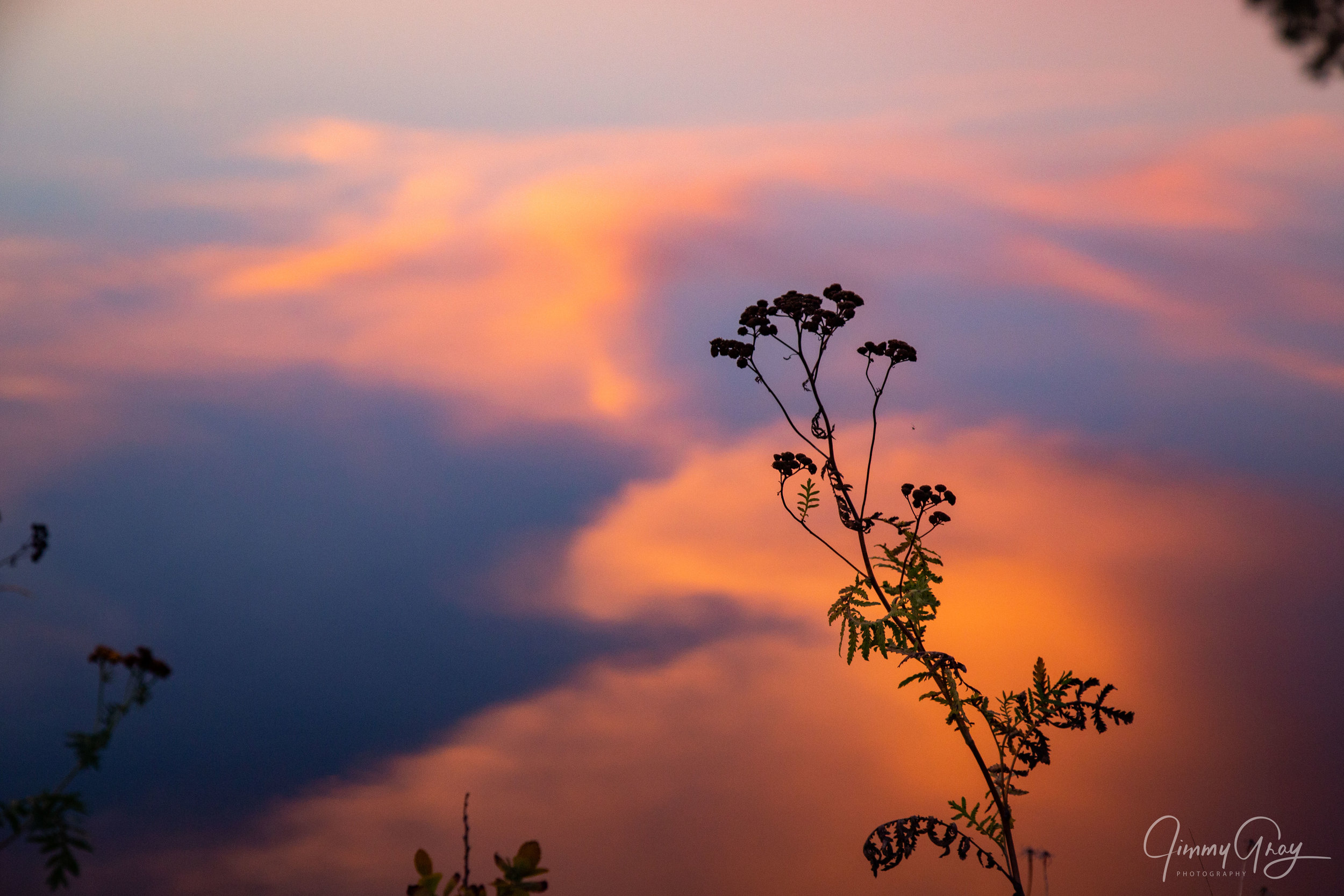 Flower Silhouette Sunset Reflection On The Androscoggin River