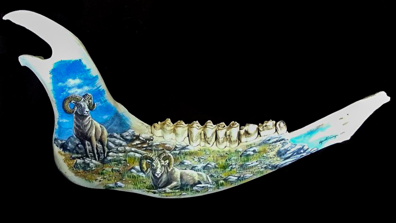 Jaw Bone Rams.jpg
