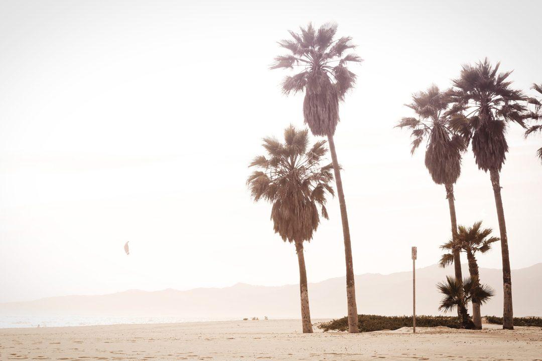 palm-trees-1080x720.jpg