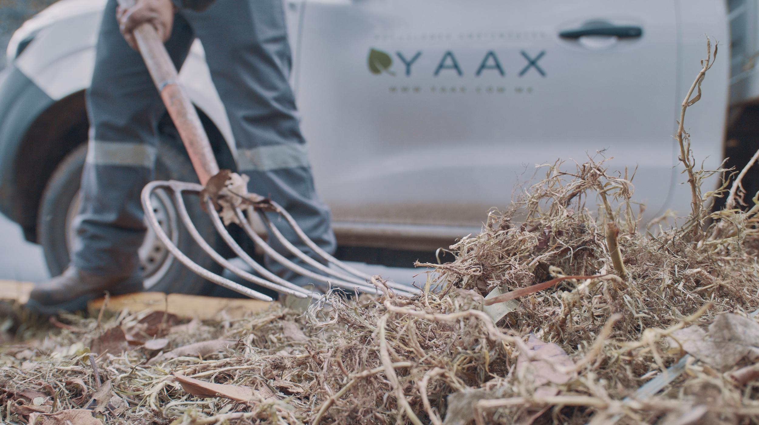 YAAX 9.jpg