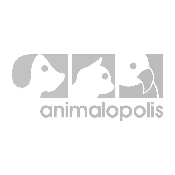 01-animalopolis.jpg