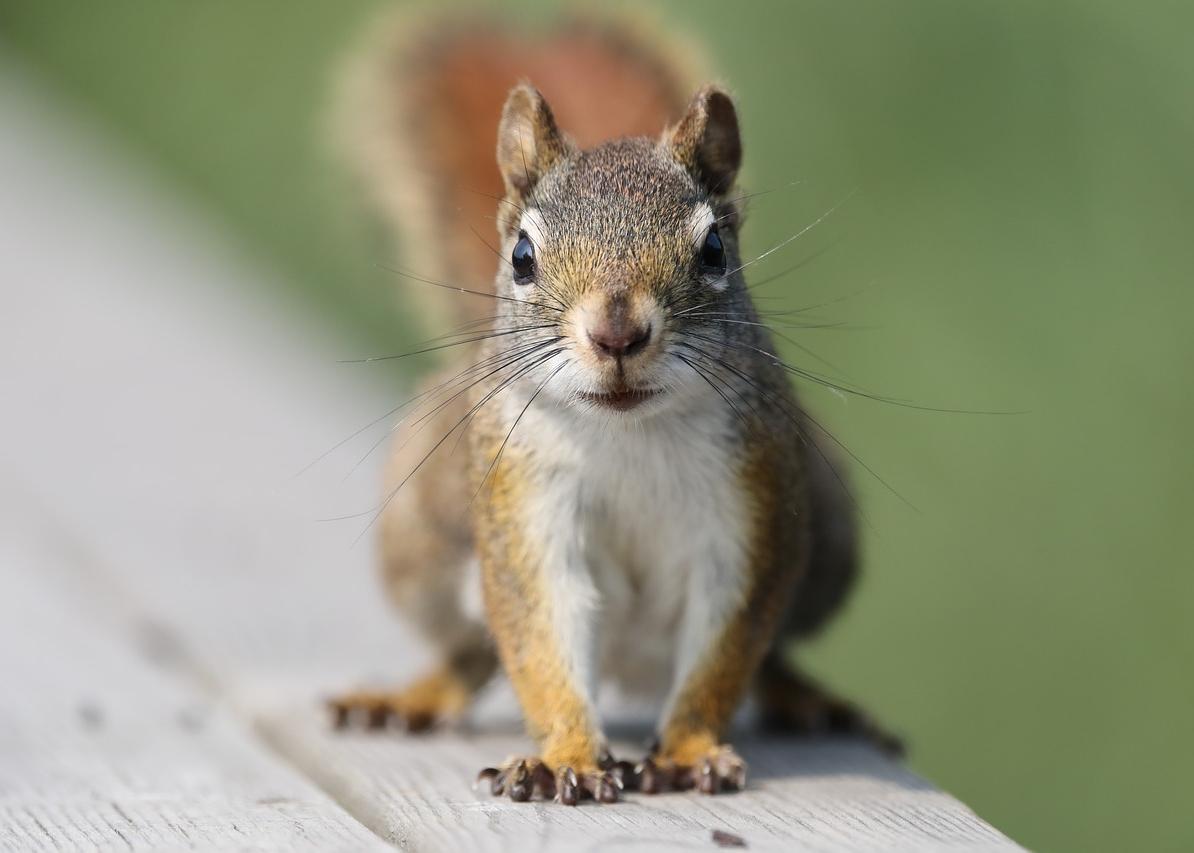 Over - Vraag je je af waarom hier een foto van een eekhoorn staat? Of liever gewoon mijn CV bekijken? Beide kan hier.