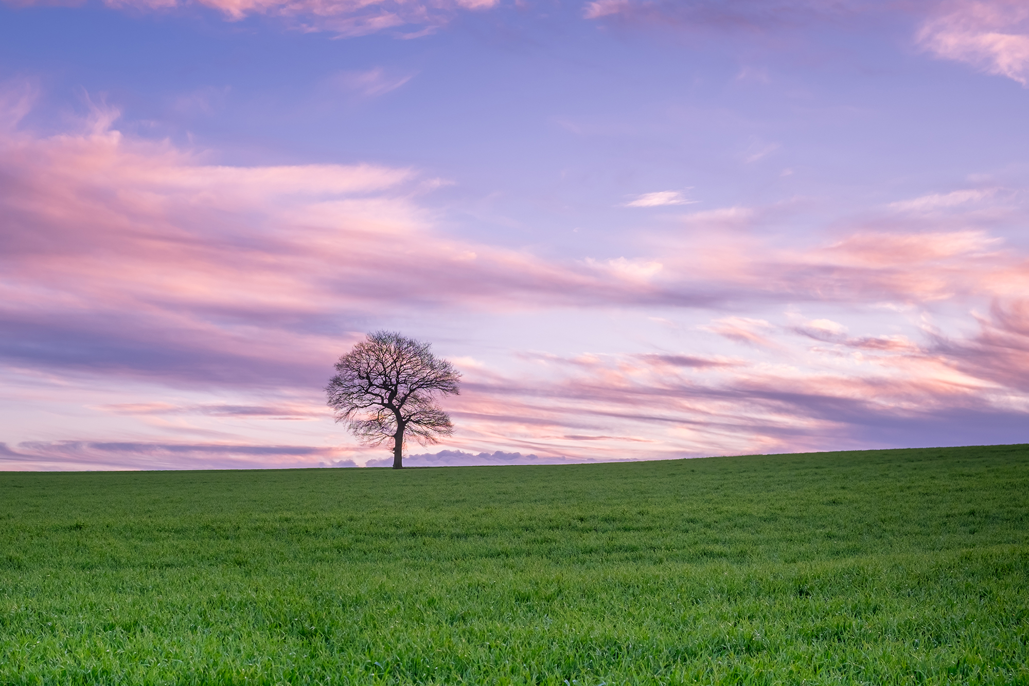 A photo of a lone tree taken at Sunset in Surrey by Trevor Sherwin
