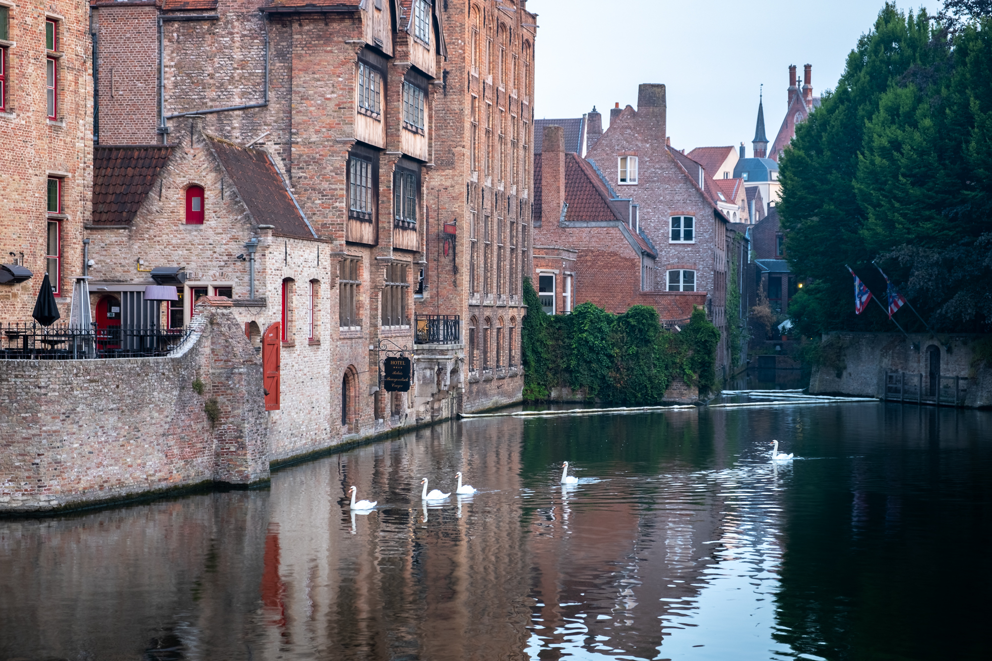 A photo of swans on the Dijver Canal at the Relais Bourgondisch Cruyce in Bruges, Belgium taken by Trevor Sherwin