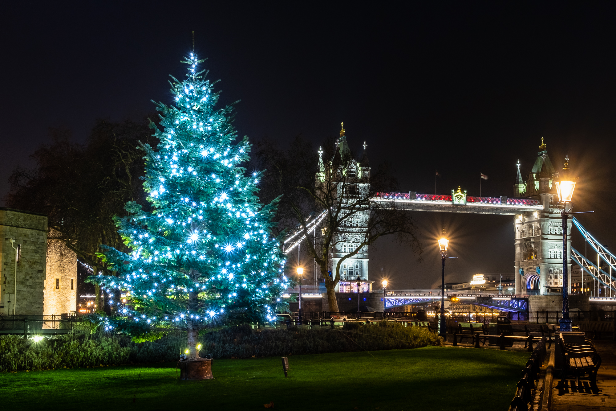 A photo of a Christmas Tree and Tower Bridge in London taken by Trevor Sherwin