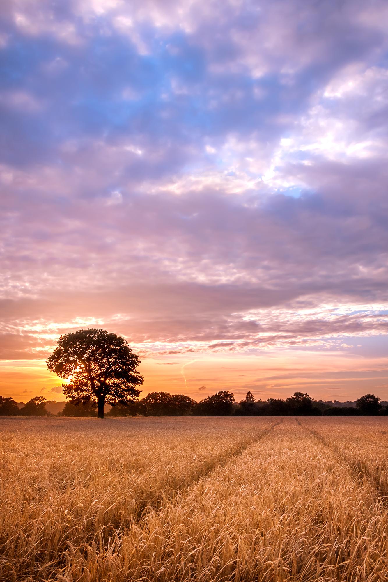 120828 - Surrey - Sunset - Chaldon Field 002.jpg