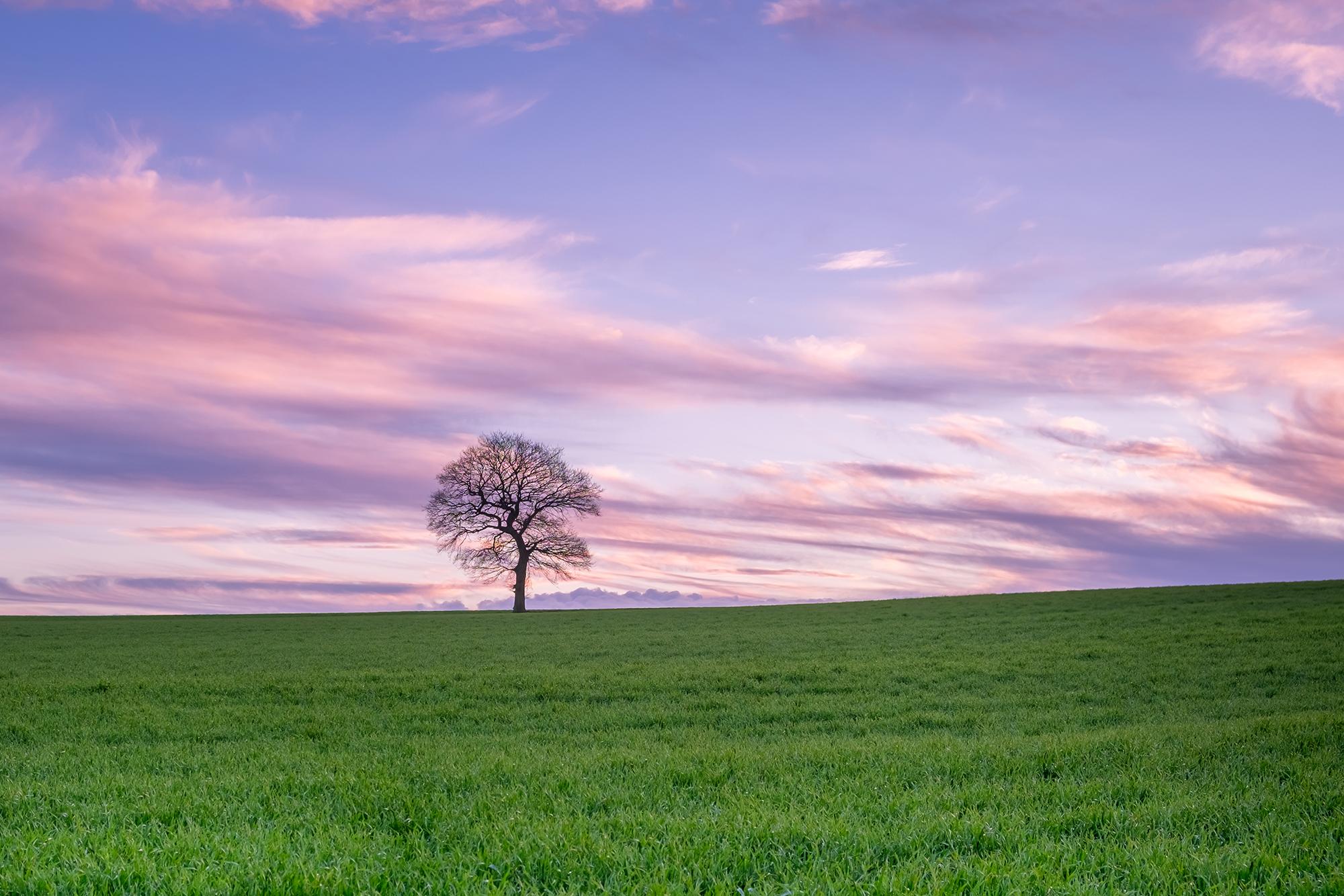 170204 - Surrey - Sunset - Chaldon Field 004.jpg