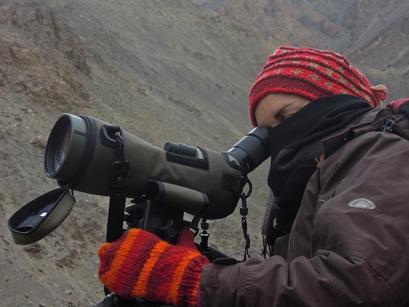 Hópárduc keresés Ladakhban. India, 2011. Fotó © Vasas András