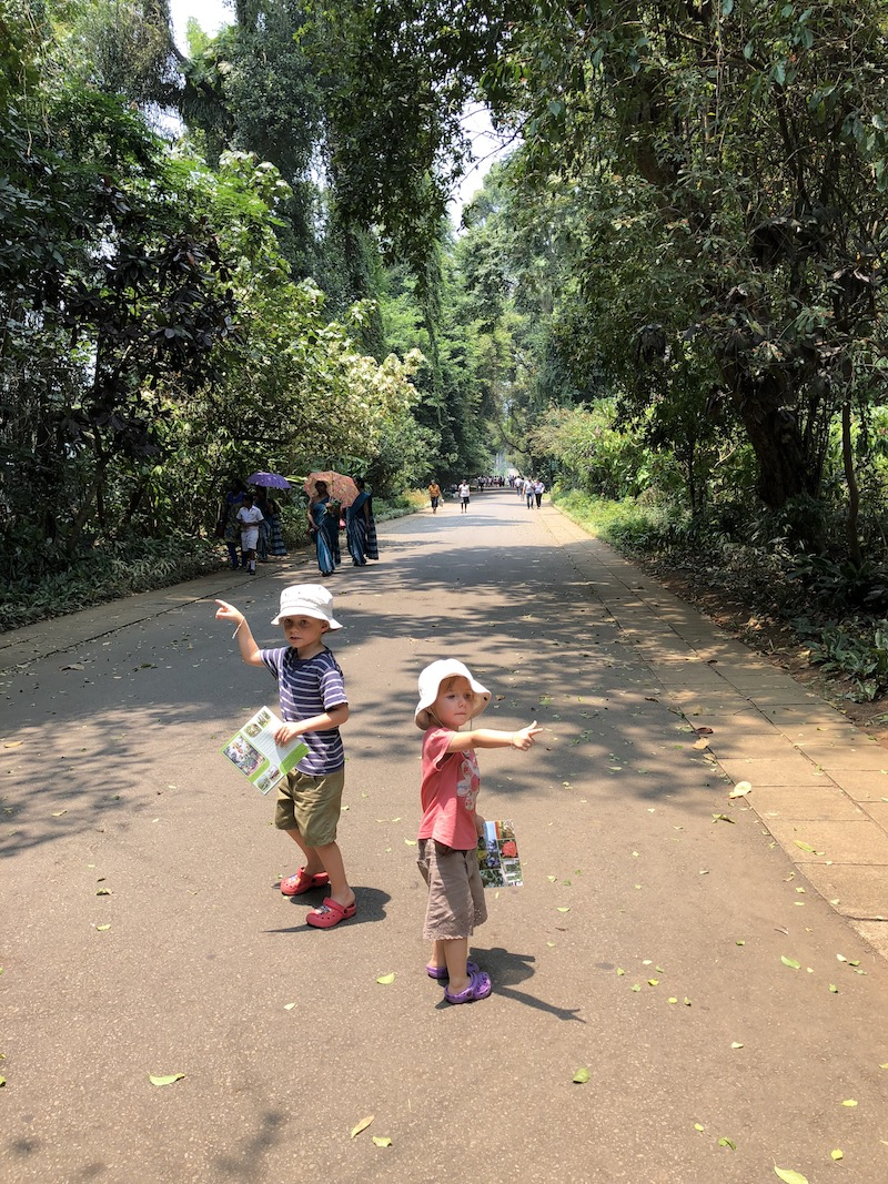 OK, little explorers, which way next? Peradeniya Botanical Gardens. Photo © Szilvia Molnár