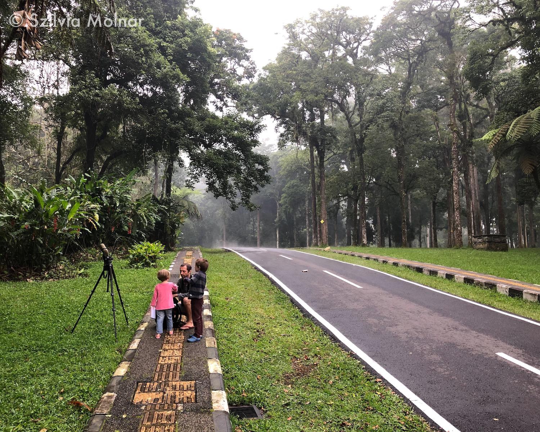 Ködös délutáni madarászat a Kebun Raya Botanikus Kertben