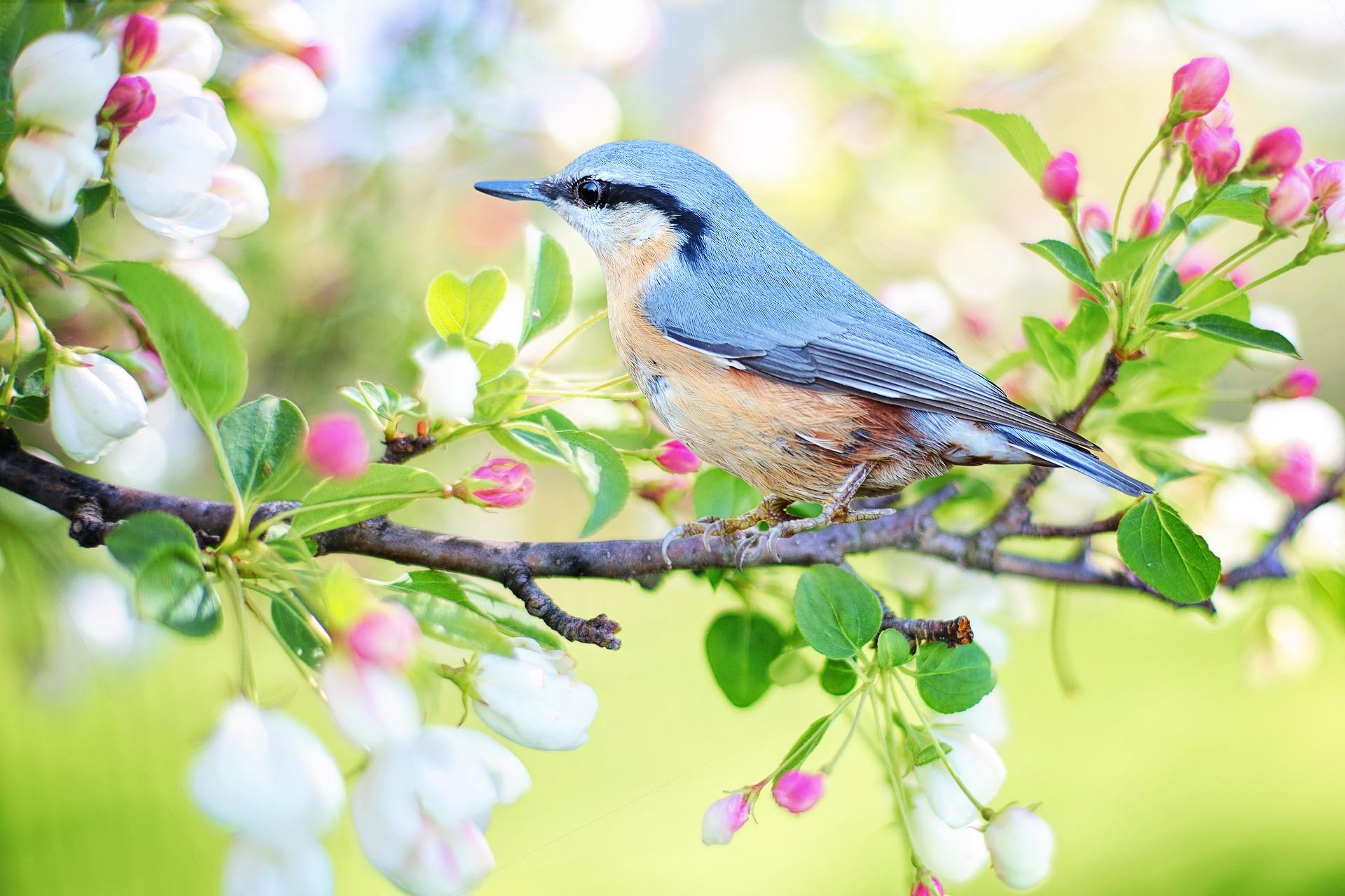 spring-bird-2295431_1920.jpg