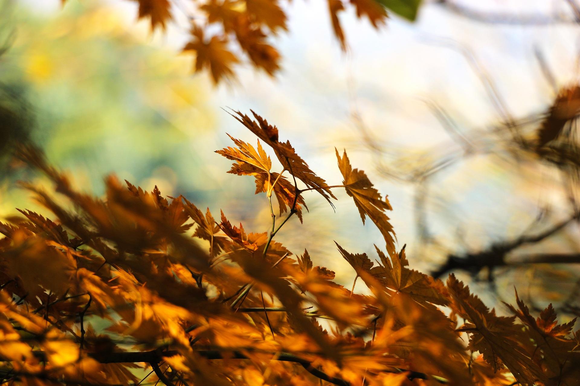 autumn-507544.jpg