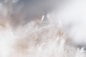 Plumas ángeles.jpg