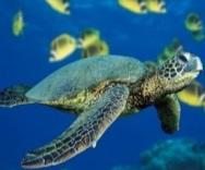 Turtle-Under-the-sea.jpg