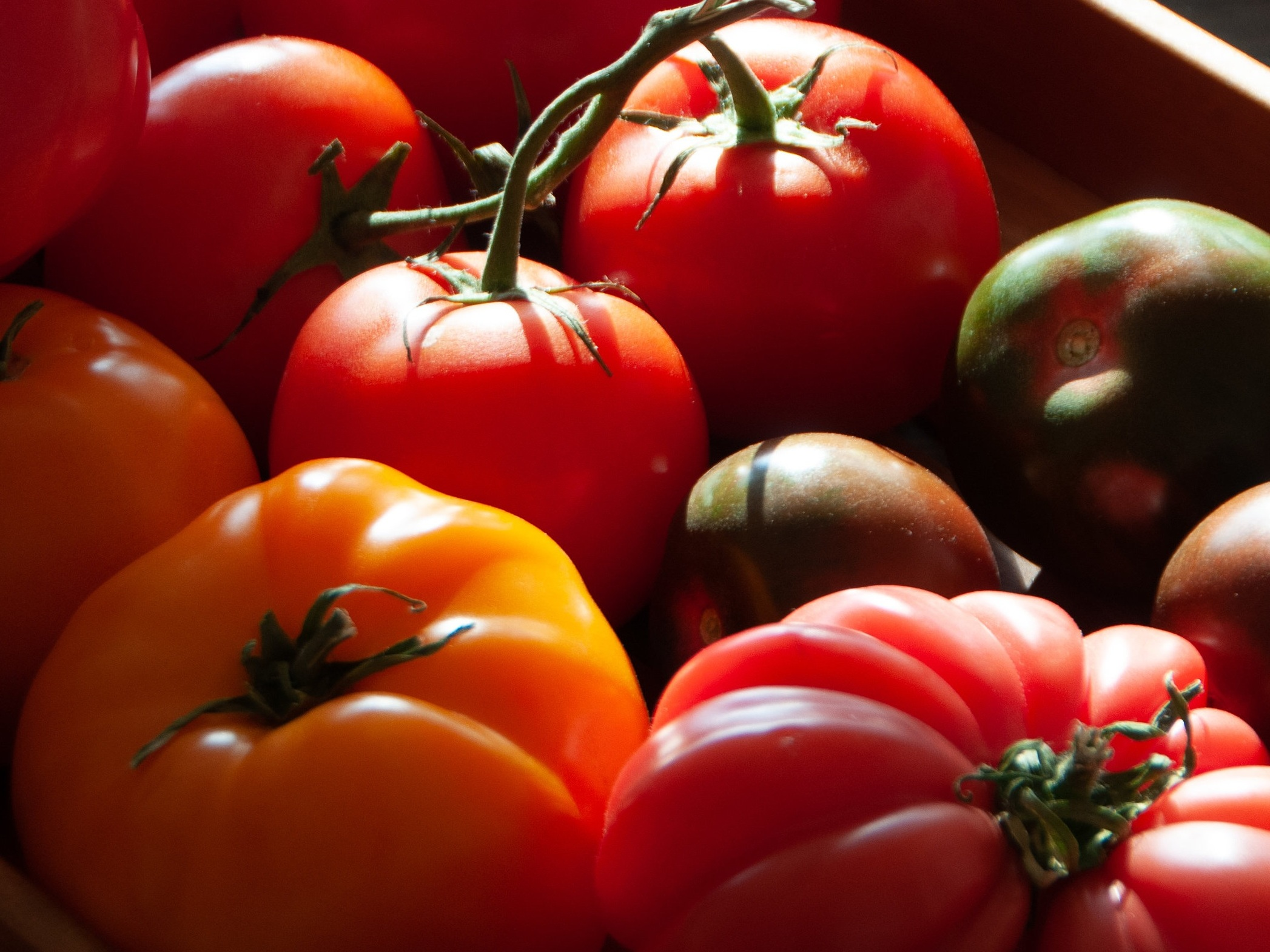 Tomato Tasting - Taste different tomato varieties from three local farms and choose your favorites! Selections are sourced from our friends Hawthorne Valley Farm, Ironwood Farm, and Rock Steady Farm.