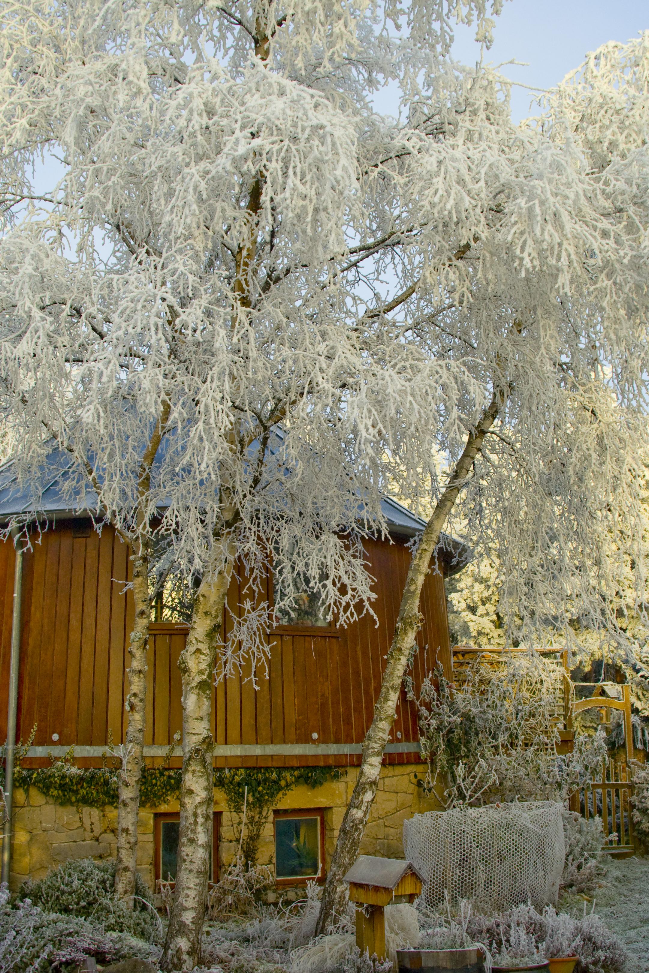 bagendfrost2.jpg