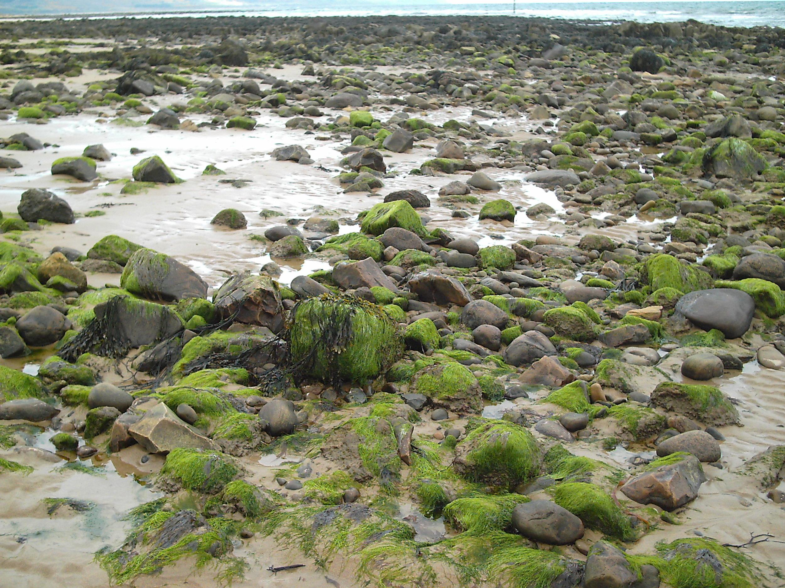 Caithness dunes