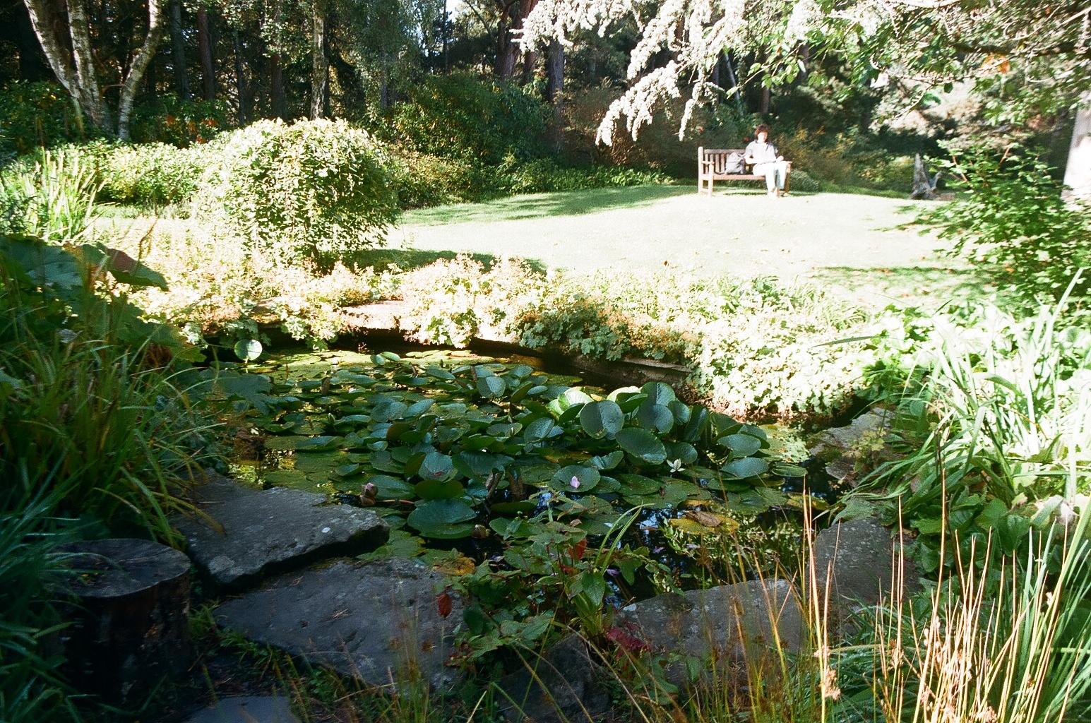 Garden meditation.jpg
