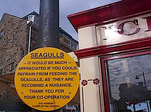 Seagulls.sign.jpg