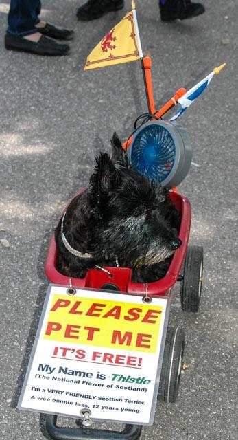 Scottie @Dunedin Please pet me (1 of 1).jpg