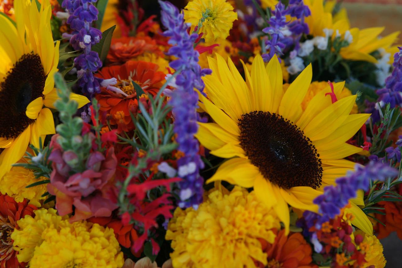 Flowers from Harvest Moon Farm at Bloomington, Indiana Farmers' Market, Fall 2017.