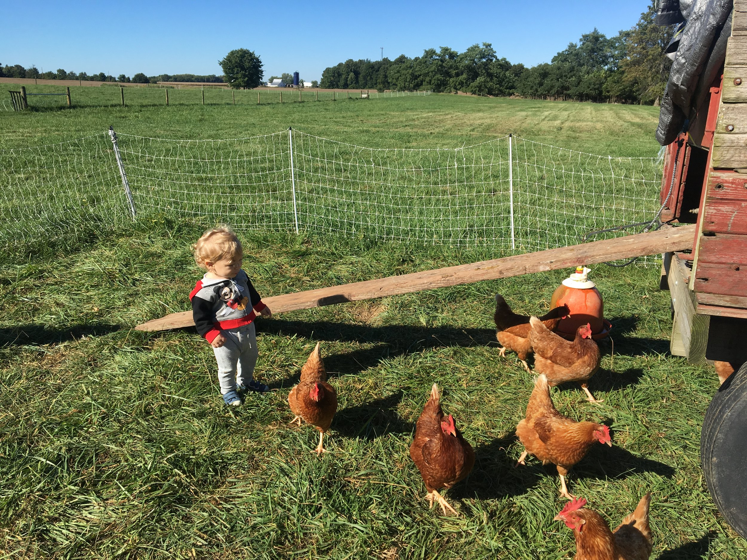 Hanging out with some chickens at Nana and Pop Pop's farm.