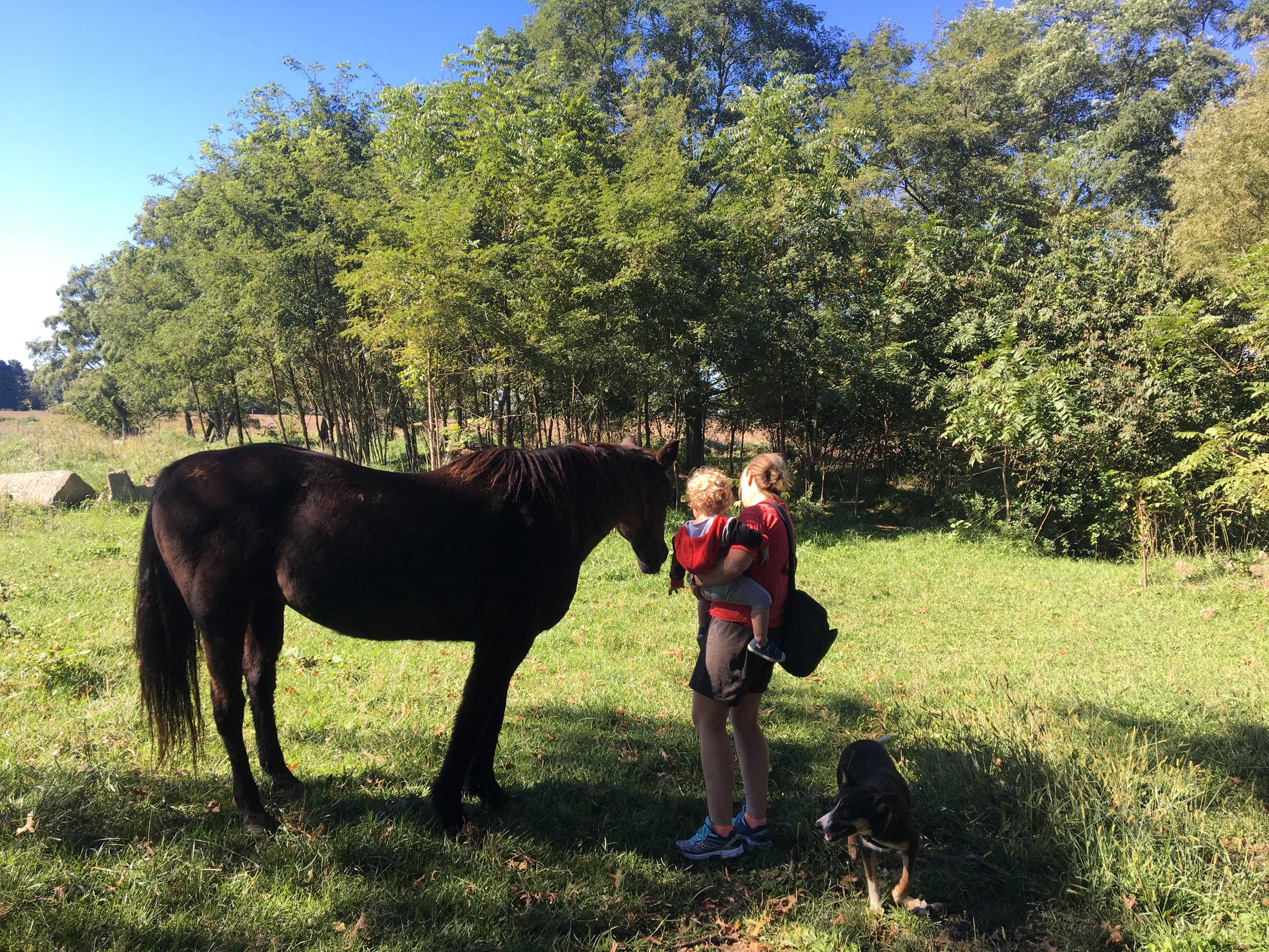 Meeting my horse, Hannah, for the first time at Nana and Pop Pop's farm.