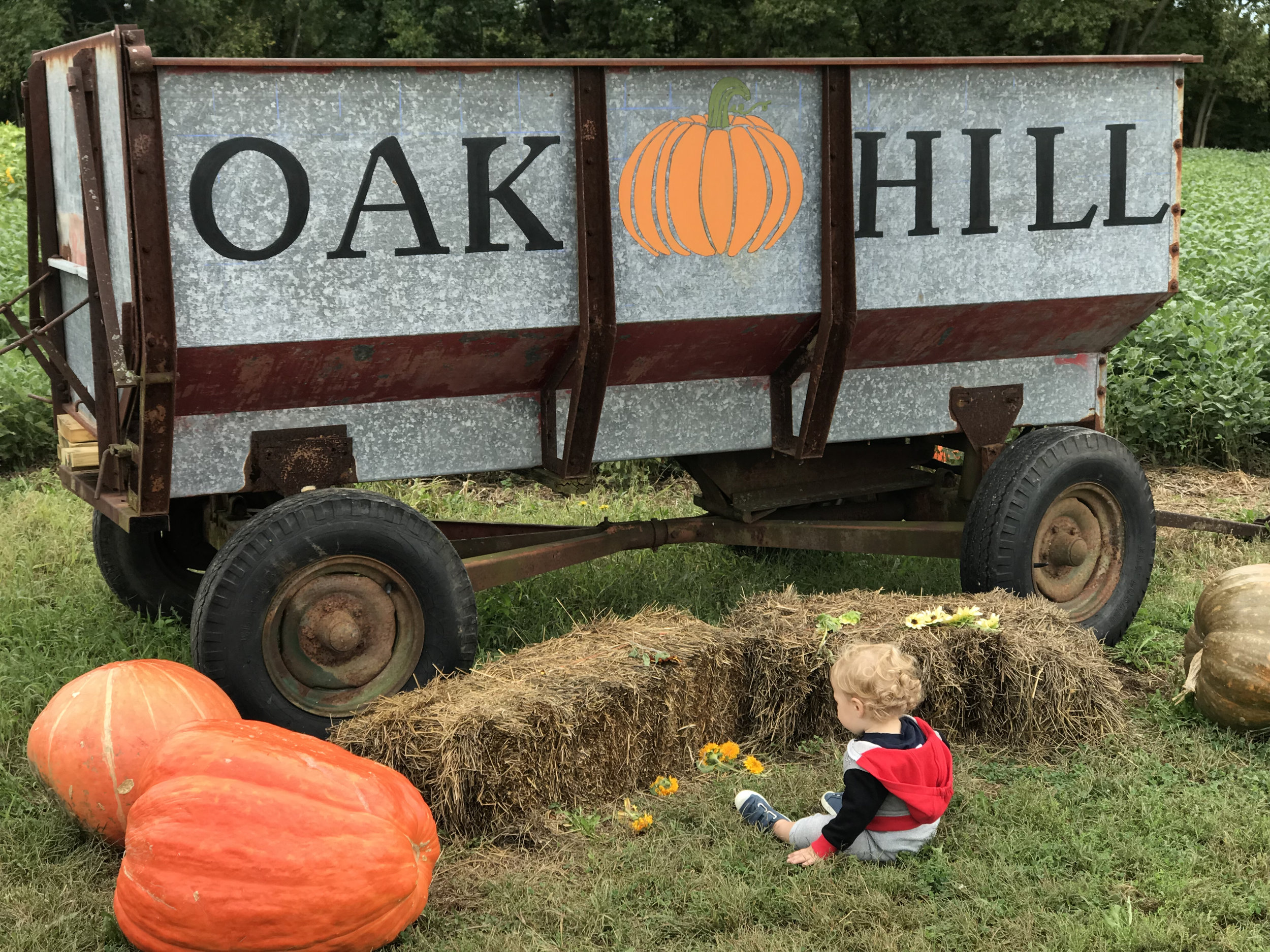 Visiting a pumpkin patch in Crawfordsville in September.