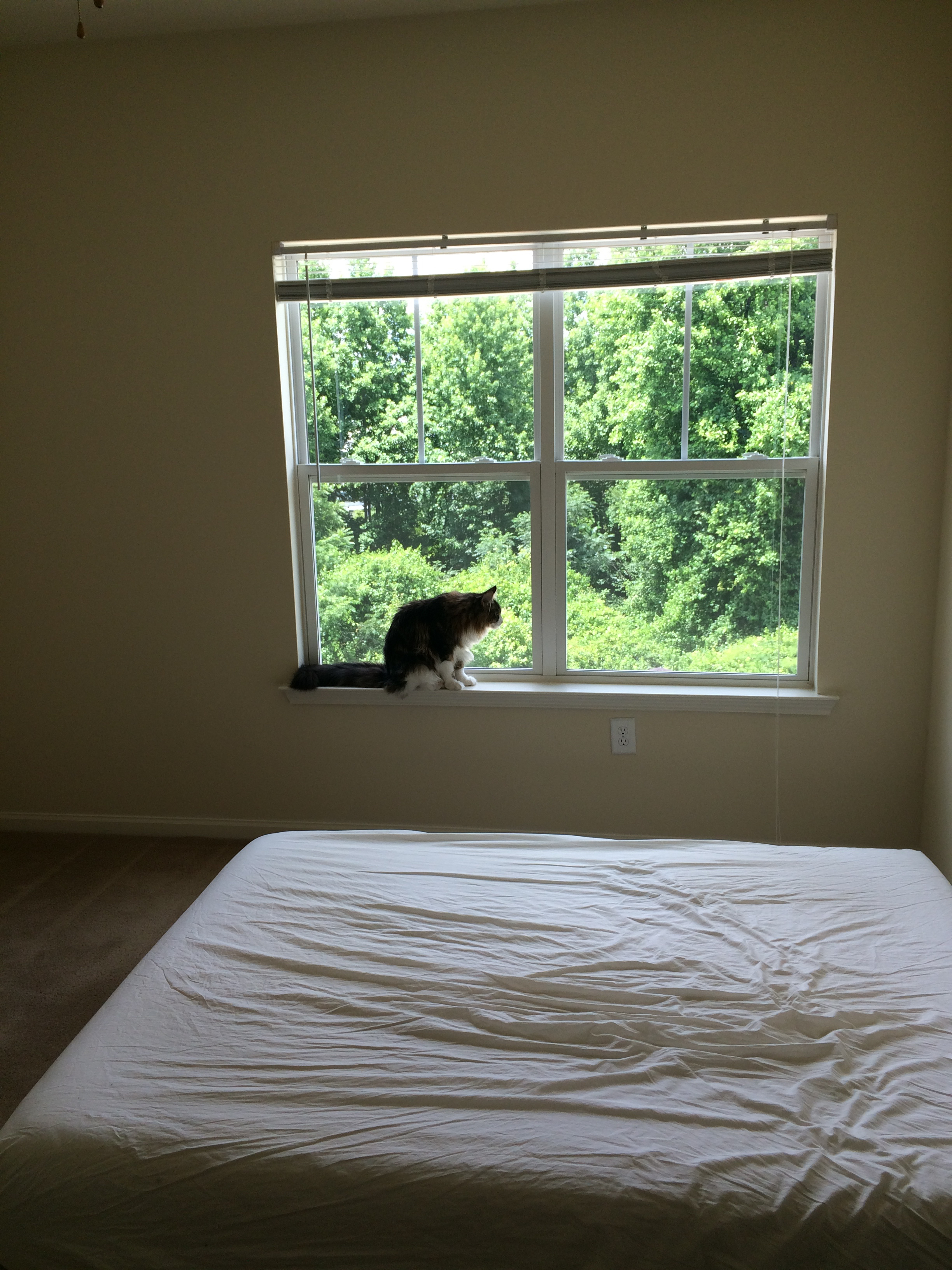 Nugget's favorite place—the window, so he could check out all the babes down at the pool. (Move in day at our favorite apartment in Georgia.)